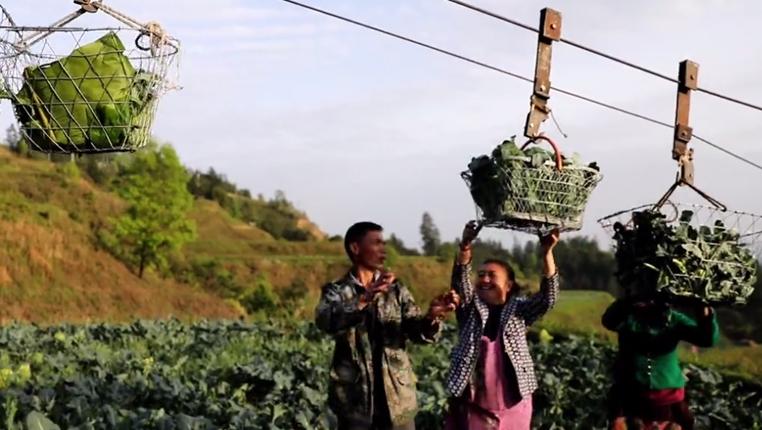 """蔬菜坐""""缆车""""!这个海拔704米的贫困村不简单"""