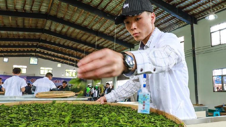 贵州举办古茶加工技能大赛
